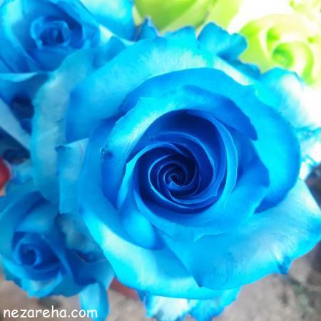 عکس گل رز آبی , رز آبی , عکس زیبا گل رز آبی , رز آبی مناسب برای پروفایل