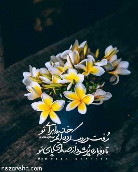 نرگس , گل های نرگس برای پروفایل , عکس گل نرگس برای نلگرام
