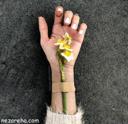 عکس گل نرگس زیبا , عکس گل نرگس , تصاویر گل نرگس