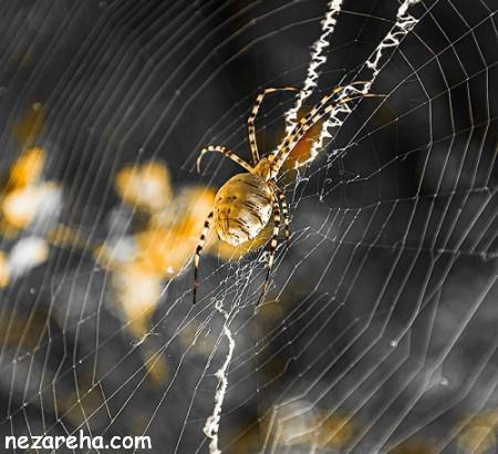 تعبیر خواب عنکبوت , دیدن تار و نیش عنکبوت , کشتن عنکبوت در خواب